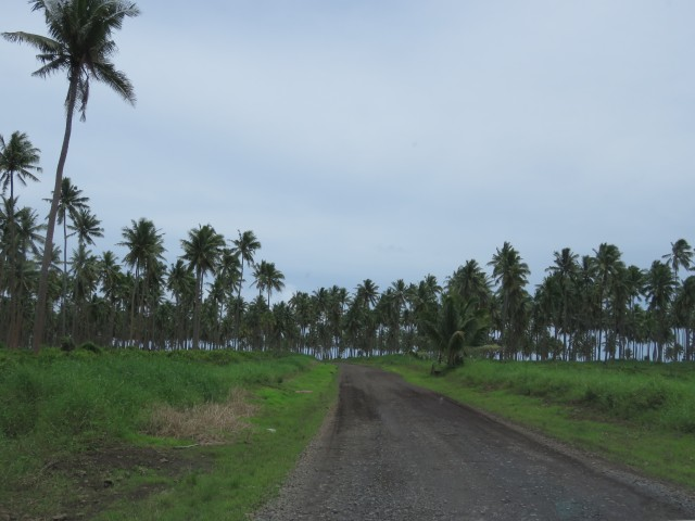 Taveuni: Gravel Roads 3