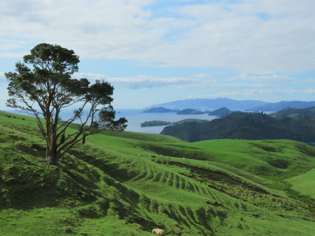 NZ: Manaia Road Saddle and Lookout
