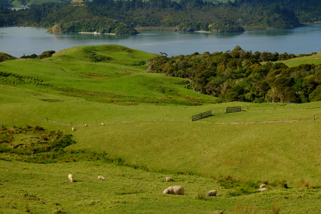 NZ: Manaia Road Saddle and Lookout 3