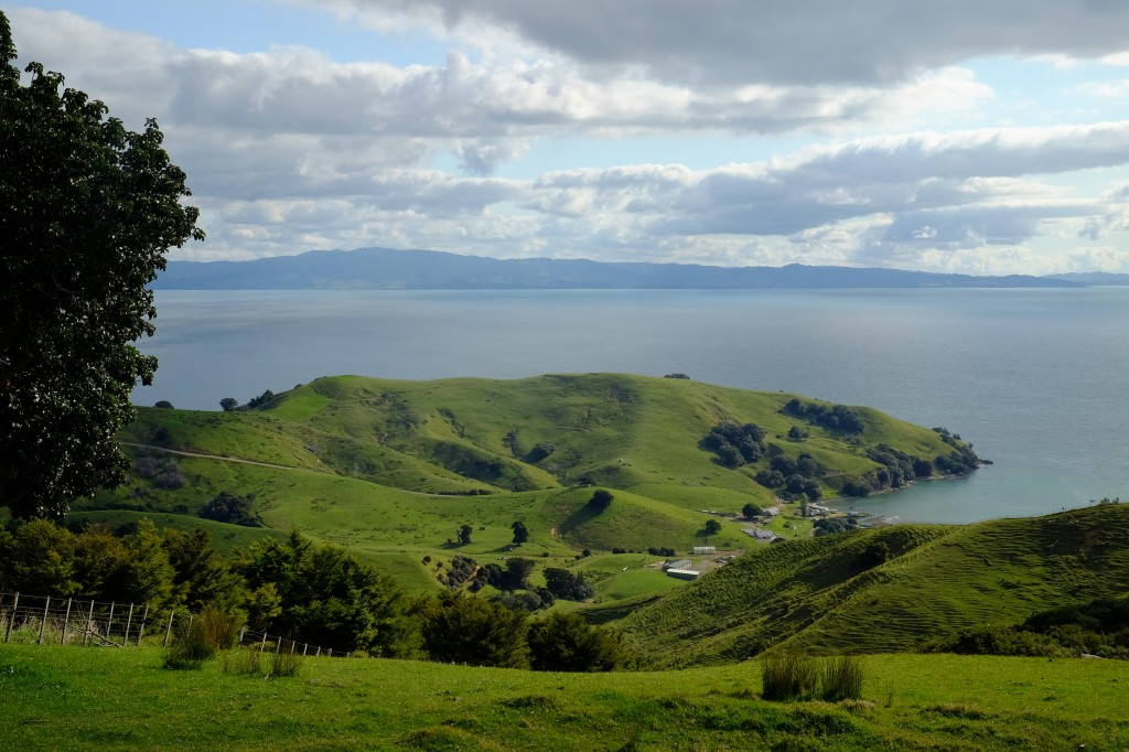 NZ: Manaia Road Saddle and Lookout 4