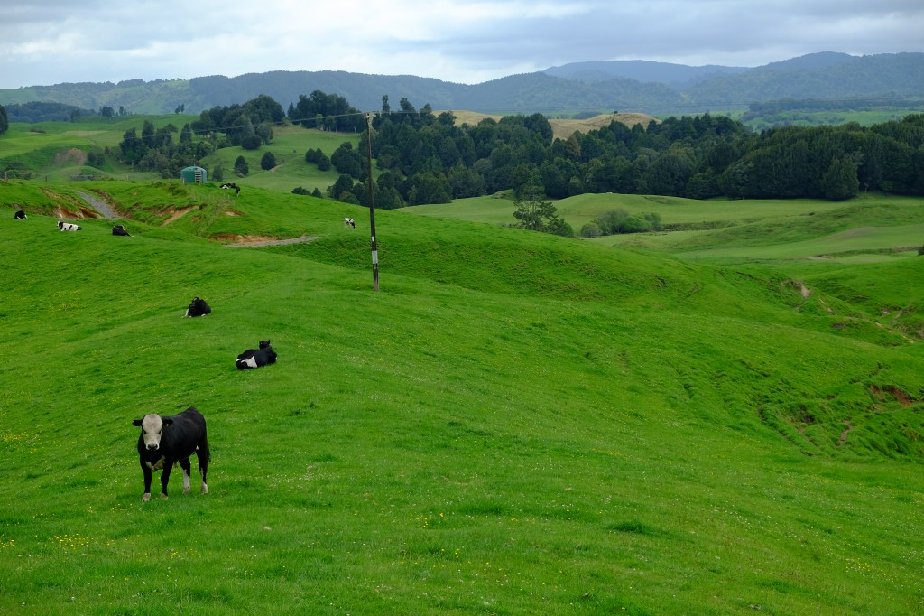 NZ: Weg nach Waitomo 2
