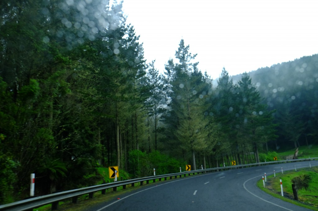 NZ: State Highway 4, Nebel 5